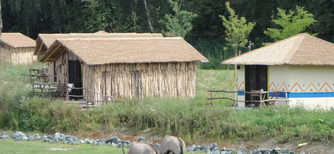 Masai – Serengeti Park